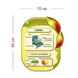 Стенд Строение растительной клетки 70х90 см