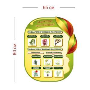 Стенд Царство Растения 65х80 см